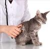 Ветеринарные клиники в Богдановиче